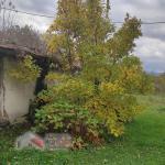 Kuća, Ruđinci